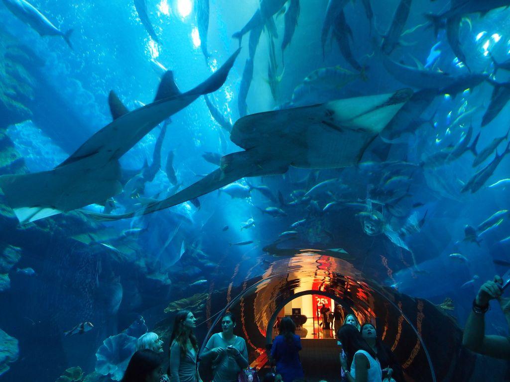 Тоннель в аквариуме Дубая Молла.