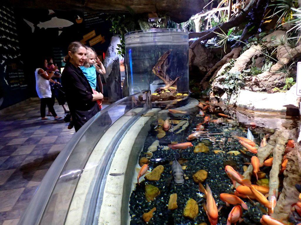 В подводном зоопарке.
